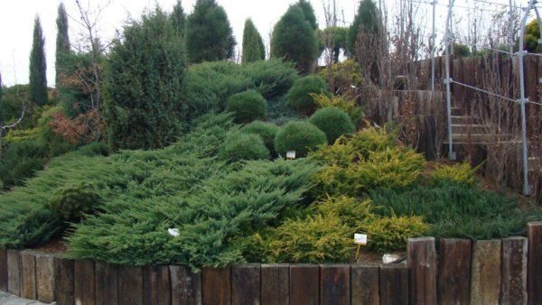 Посадка деревьев и кустарников на склоне